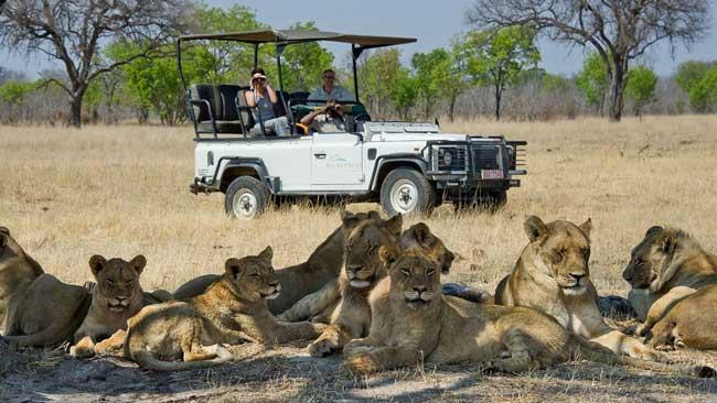 Южноафриканское сафари