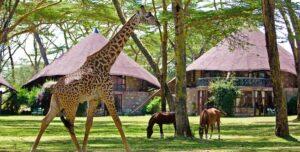 Топ-10 красивых мест для посещения в Кении
