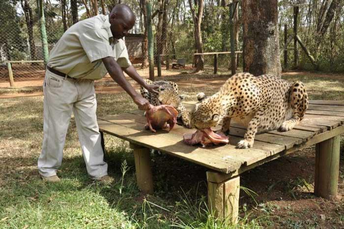 приют для животных Найроби