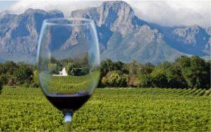 Виноградники и дегустации вин в Западном Кейпе, ЮАР