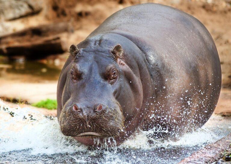 опасные животные Африки